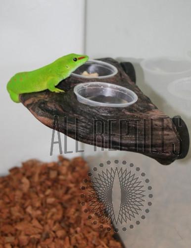 Magnatural Gecko Ledge