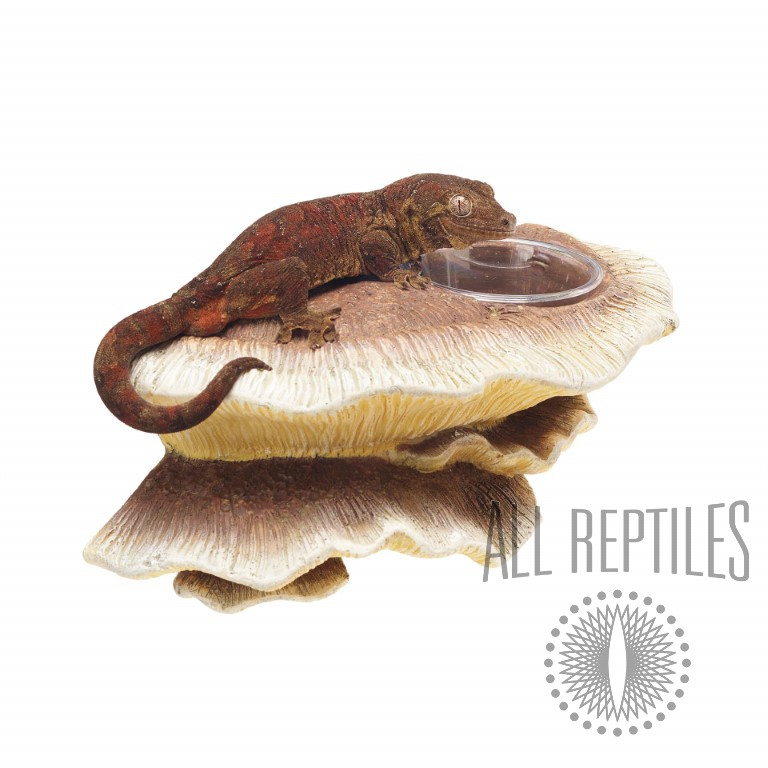 Zilla Mushroom Feeding Ledge