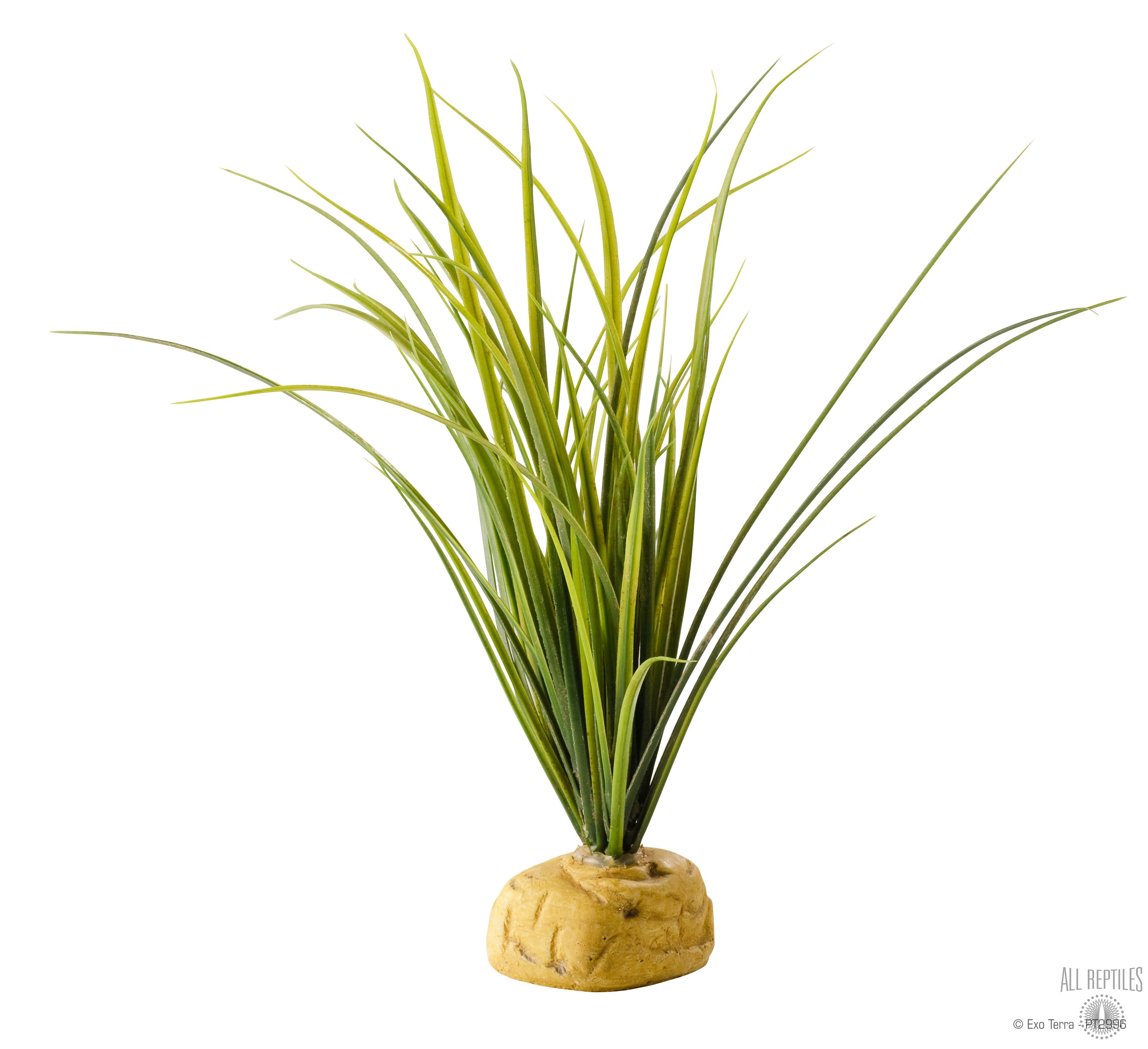 Exo Terra Turtle Grass