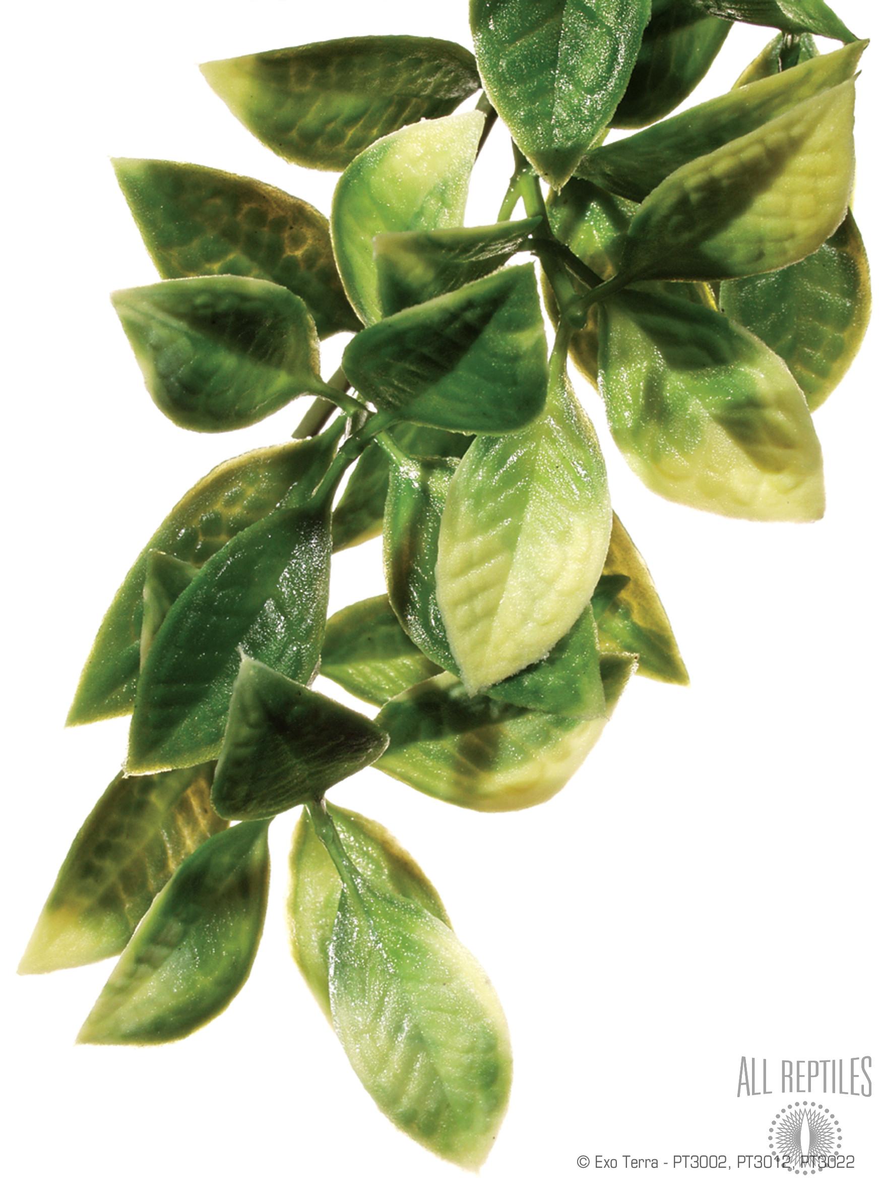 Exo Terra Hanging Plant Mandarin
