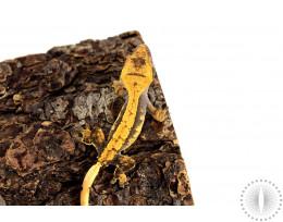 Harlequin Bold Pinstripe Crested Gecko
