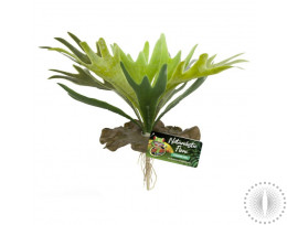ZM Staghorn Fern