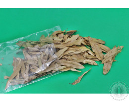 Willow Oak Leaves Small Pack