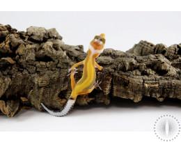 Bold Stripe Blood Leopard Gecko