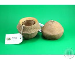 Newcal Monkey Pods