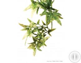 Exo Terra Shrub Plant Croton