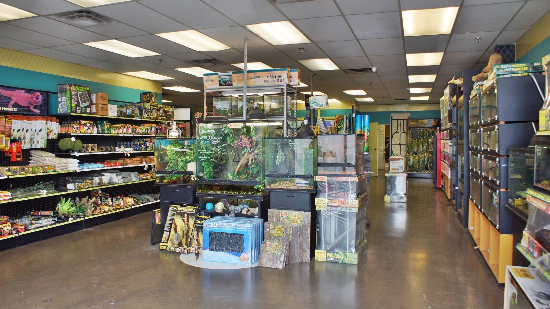 52c246439c What Services   Products Do We Offer  All Reptiles offers a wide selection  of exotic pet ...